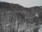 Snow in Schenley Park